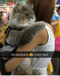 Memes, Backpacking, and 🤖: his backpack I can't deal Cat much serious. Much focus. Very concentrate. (dm for pussasaur credit) | For more @aranjevi