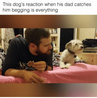 Dad, Dogs, and Memes: his dog's reaction when his dad catches  him begging is everything He thinks he's being discrete