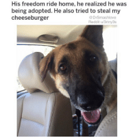 "Af, Amazon, and Anaconda: His freedom ride home, he realized he was  being adopted. He also tried to steal my  cheeseburger  @DrSmashlove  Reddit u/3riny3s A few weeks ago I hyped up a anti perspirant called Tom's North Woods. It smells absolutely wonderful and works great. HOWEVER. It got aluminum in it 😖. Bro!! How u gon be a natural product and u got aluminum! I read the packaging closely and it said ""naturally sourced aluminum."" FOH 😂. ""We naturally select our poisonous metallic substances from the finest natural mines."" Aluminum is an ELEMENT. It's pure. There is no difference between aluminum from recycled pepsi cans and aluminum from a mine. I was mad AF 😤. So I went back on my quest to find something natural. Well lo and behold Tom's makes natural deodorant that's called ""wild lavender"". And lemme tell u - it smell pleasant asf! Like basically u slather it on and u sniff ya underarm and u magically transported to the soap aisle of Whole Food and a pleasant hipster girl with ear spacers, short hair, and a name tag that say ""RAIN"" smile at u 😍 (side note: was she born 'Rain'? Or is her name Mandy but she adopted the name 'Rain' after attending burning man and dropping acid once? Maybe her Nani make it 'Rain'? 😍 lmao I'm wild lemme stop 😂.) Caveat: if u work out hard AF like me, it will wear off a lil bit. Like for a 100 degree hot summertime Chi day u might could go with the Tom's north woods aluminum joint. It will give u cancer-memory loss but at least u smell spicy 😂. Also and I done said this before: I shave my public hair which is a tradition among people of my faith. I know some of u women like ""ew - DEALBREAKER!"" WELL FU— just kidding! Baby girl that's fair! 😂 I accept our incompatibility and hope u find the hairy Chewbacca lookin a$$ Man of ya dreams! 😍 Now then u men out here at the gym with the grapefruit sized amazon rainforest patch of stinky-ass underarm hair that drip white liquid on the elliptical, the 'wild lavender' may not cut it 😂. Y'all got that 'built in' stincc u probably need Mitchum. But if u down with that razor life it will give u plenty of protection against Le Stincc. May all of u live blessed and chemical free lives bless up 😍😂"