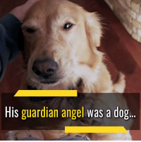 Memes, True, and Angel: His guardian angel was a dog Angel shows her true loyal self  🐕     #mansbestfriend 💞