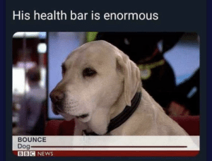 Practically Boss Level: His health bar is enormous  BOUNCE  Dog-  BBC NEWS Practically Boss Level