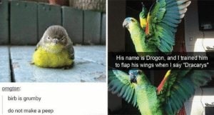"A-well-a everybody's heard about the birb! Birb birb birb, b-birb's the word!#birdmemes #funnybirds #animalmemes #funnymemes #cutebirds: His name is Drogon, and I trained him  to flap his wings when I say ""Dracarys""  omgtsn:  birb is grumby  do not make a peep A-well-a everybody's heard about the birb! Birb birb birb, b-birb's the word!#birdmemes #funnybirds #animalmemes #funnymemes #cutebirds"