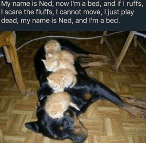 His nsme is Ned. He is bed: His nsme is Ned. He is bed