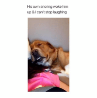 Memes, Twitter, and Tag Someone: His own snoring woke him  up & I can't stop laughing Tag someone 🐶 via: axwaclawski - twitter yyc