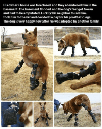 Memes, Leggings, and Neighbors: His owner's house was foreclosed and they abandoned him in the  basement. The basementflooded and the dog's feet got froxen  and had to be amputated. Luckily his neighbor found him,  took him to the vet and decided to pay for his prosthetic legs.  The dog is very happy now after he was adopted by another family.  Tenho  quatro patas  mensa  HEMETAPNU  iments This makes me smile so much! 😊😊😊😊 amazingpeople