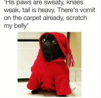 Scratch, Carpet, and Sweaty: His paws are sweaty, knees  weak, tail is heavy. There's vomit  on the carpet already, scratch  my belly'