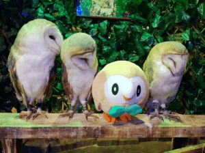 Friends, Tumblr, and Blog: his-shining-tears:Rowlet  friends.