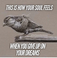 Memes, Dreams, and Reason: HISIS HOW YOUR SOUL FEELS  @TheClassyGentleman  WHEN YOU GIVEUPON  YOUR DREAMS Follow your dreams, they are there for a reason. . . followyourdreams giftfromgod inspiredaily