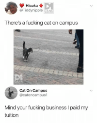 Dank, Fucking, and Business: Hisoka  @Tiddynipple DANk  MEMEOLOGY  There's a fucking cat on campus  DANK  Cat On Campus  @catoncampus1  Mind your fucking business l paid my  tuition