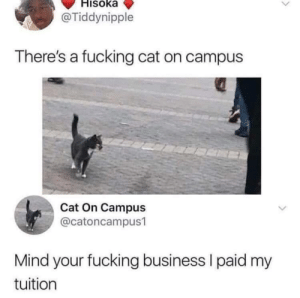 On Campus: Hisoka  @Tiddynipple  There's a fucking cat on campus  Cat On Campus  @catoncampus1  Mind your fucking business I paid my  tuition