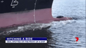gluten-free-pussy:That's her Uber : HITCHING A RIDE  SEAL SPOTTED ON THE FRONT OF A SHIP  NEWS gluten-free-pussy:That's her Uber