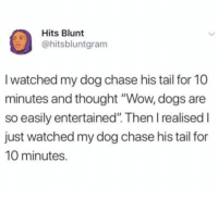 "Dogs, Wow, and Chase: Hits Blunt  @hitsbluntgram  I watched my dog chase his tail for 10  minutes and thought ""Wow, dogs are  so easily entertained"". Then I realised I  just watched my dog chase his tail for  10 minutes. Ugh the cutest"