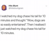 "Dogs, Funny, and Wow: Hits Blunt  @hitsbluntgram  I watched my dog chase his tail for 10  minutes and thought ""Wow, dogs are  so easily entertained"". Then I realised I  just watched my dog chase his tail for  10 minutes. 😂😂 https://t.co/TLa3XLKrsq"