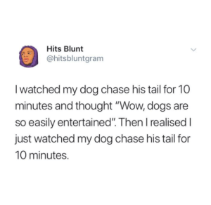 """Dogs, Wow, and Chase: Hits Blunt  @hitsbluntgram  I watched my dog chase his tail for 10  minutes and thought """"Wow, dogs are  so easily entertained"""". Then I realised I  just watched my dog chase his tail for  10 minutes. Dogs are so easily entertained. 🐶"""