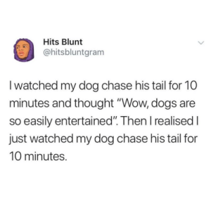 """Animals, Dogs, and Love: Hits Blunt  @hitsbluntgram  I watched my dog chase his tail for 10  minutes and thought """"Wow, dogs are  so easily entertained. Then I realised l  just watched my dog chase his tail for  10 minutes. Follow our @animalsmeettheinternet page if u love animals"""