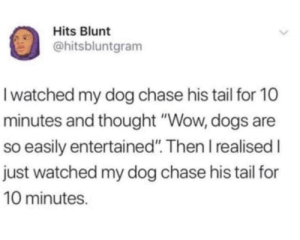 "meirl: Hits Blunt  @hitsbluntgram  Iwatched my dog chase his tail for 10  minutes and thought ""Wow, dogs are  so easily entertained"". Then I realised I  just watched my dog chase his tail for  10 minutes. meirl"