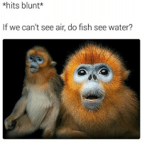 Blunts, Kanye, and Memes: *hits blunt  If we can't see air do fish see water? 😭😭👏 @will_ent - - - - - - kimkardashian kyliejenner khloekardashian trump lol comedy la losangeles newyorkcity londoneye ovo london basicbitch omfg selenagomez travisscott omfg kardashians drake birmingham cats toronto memesdaily nochillzone lmaoo lol goals kanye meekmill hiphop