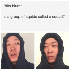 : hits blunt*  is a group of squids called a squad?