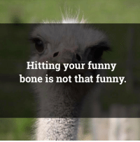 Memes, 🤖, and Bone: Hitting your funny  bone is not that funny so true 😜