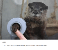 Otter Meme: hkirkh  there is an aquarium where you can shake hands with otters.  FYI,