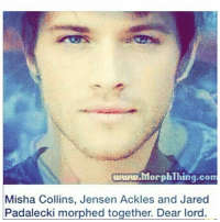 Memes, Wow, and Jared: hlorphThing.com  Misha Collins, Jensen Ackles and Jared  Padalecki morphed together. Dear lord. this post is soo hq like wow👀