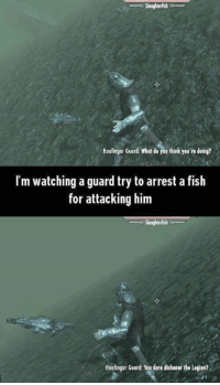 That TES:V Skyrim guard logic tho: Hoalingor Guard wiat do you think you're doing?  I'm watching a guard try to arrest a fish  for attacking him  Hoofingar Guard: You tore dishonor the Lenion? That TES:V Skyrim guard logic tho