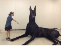 Tumblr, Australia, and Blog: hobbits-and-destiel:  skeletonwang:  that is not a dog that is the continent of australia   clifford went through a goth phase