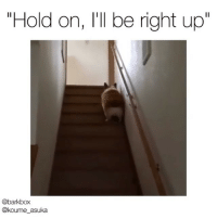 "Corgi, Memes, and Pup: ""Hold on, I'll be right up""  @barkbox  @koume_asuka Just a tad obsessed with Corgi stair hops. Via @barkbox - @bark Pup @koume_asuka"