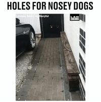 'My dad saw that video of the guy who cut holes in his fence for his nosey dog so he decided to test it out and the results did not disappoint' 😂😂: HOLES FOR NOSEY DOGS  oryful  LAD  BIBLE 'My dad saw that video of the guy who cut holes in his fence for his nosey dog so he decided to test it out and the results did not disappoint' 😂😂