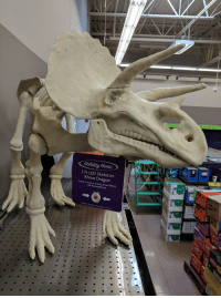 Funny, Home, and Dragon: Holiday Home  49  5 ft LED Skeleton  Rhino Dragon  Sound Activated Roaring Sound Effects  LED Illuminated Eyes  Press  Here  Requires 3 AA Batteries (Included)-5 ft (1.5 m) No, that's a triceratops.