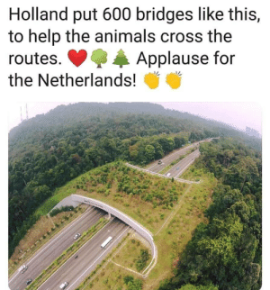 Animals, Cross, and Help: Holland put 600 bridges like this,  to help the animals cross the  Applause for  routes.  the Netherlands!  M Netherlands being so wholesome ❤️