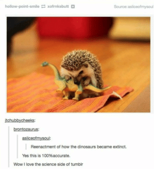 How the Dinosaurs ACTUALLY Went Extinct: hollow-point-smile xofrnksbutt+  Source: asliceofmysoul  itchubbycheeks:  brontozaurus:  asliceofmysoul:  Reenactment of how the dinosaurs became extinct.  Yes this is 100%accurate.  Wow I love the science side of tumblr How the Dinosaurs ACTUALLY Went Extinct