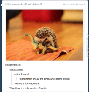 How the dinosaurs became extinct: hollow-point-smile xofrnksbutt+  Source: asliceofmysoul  itchubbycheeks  brontozaurus:  asliceofmysoul  Reenactment of how the dinosaurs became extinct.  Yes this is 100%accurate.  Wow I love the science side of tumblr How the dinosaurs became extinct