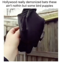 Bloods, Memes, and Puppies: Hollywood really demonized bats these  ain't nothin but some bird puppies Who else trying to have this blood sucker in your house as a pet?? 🤔😻😻😂