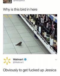 Drunk, Funny, and Walmart: holupwut  Why is this bird in here  Walmart  @Walmart  Obviously to get fucked up Jessica lets get drunk bird