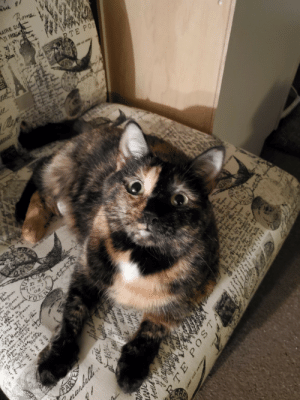She is a very chatty kitty. Always talkin'! Say hello to Liberty!: homa  AIRE OU  E FRANGS  RTE POS  ie  Dok col eac  22 30  S7  04  feujomas  te  aba  NOha  fte  forud  k.8  0B! 920  40090  RA  2x.sin  m# C  1e Y  s,rvc  dv hu  Tuumuna  ainhrw  r  en2 u1  aion  NXI 1S 210  TE POS TAR  7 K  doalll  ?  18  nanden  t  N.d  nc  -annc She is a very chatty kitty. Always talkin'! Say hello to Liberty!