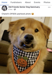 Old Friends Senior Dog Sanctuary: Home Fundraisers About Events Photos  Old Friends Senior Dog Sanctuary  3 hrs  Chanel's OFSDS yearbook photo