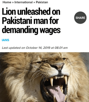Home, Lion, and Pakistan: Home International» Pakistan  Lion unleashed on  Pakistani man for  demanding wages  SHARE  IANS  Last updated on October 14, 2019 at 08.01 am Madlad releases lion on man demanding wages