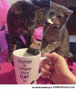 srsfunny:Home For Cat People: Home  is  IS  where  your  CAT  s!  you should probably go to TheMetaPicture.com srsfunny:Home For Cat People