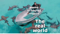 Flex tape!: Home  schooled  niggas  The  real  world Flex tape!