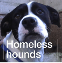 "Animals, Cats, and Dogs: Homeless  hounds ""He's a friend, he's family, he's everything."" Meet Jade, the vet who treats homeless people's dogs for free. The animals may need vaccinating, flea treatment or even just their nails clipping. Doing this, Jade says, reminds her of why she became a vet in the first place – because she's ""just a person being able to help an animal"". dogs cats pets animals hope inspire inspiration animalwelfare instagood homeless"