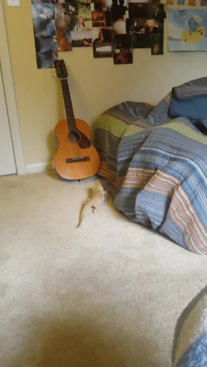 Lol, Target, and Tumblr: homonerdpumpkinpie: skies-of-salt:  westbestern:  Elvira conquering lizard breaking heights  Lol. That victory dance.  THE VICTORY DANCE ITS JUST LIKE YEAH YEAH OH YEAH YEAH OH YEAH
