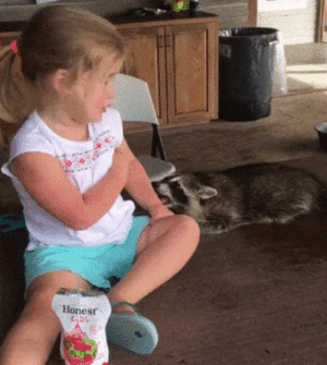 Raccoon, Perfect Loop Gif, and Show: Honest  DS Raccoon trying to show off