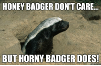 HONEY BADGER DON'T CARE  BUT HORNY BADGER DOES!