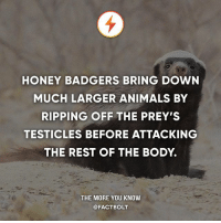 Pretty much sums up marriage.: HONEY BADGERS BRING DOWN  MUCH LARGER ANIMALS BY  RIPPING OFF THE PREY'S  TESTICLES BEFORE ATTACKING  THE REST OF THE BODY.  THE MORE YOU KNOW  @FACTBOLT Pretty much sums up marriage.