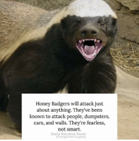 Honey Badgers will attack just  about anything. They've been  known to attack people, dumpsters,  cars, and walls. They're fearless,  not smart.  Daily Random Facts  by Single Dod Loughlng