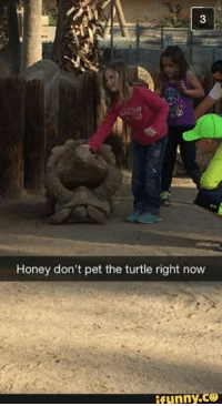 Pets, Turtle, and Girl Memes: Honey don't pet the turtle right now  ifunny.ce