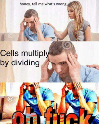 Join our group: Science Memes   (Credit to Ramon Tagbo): honey, tell me what's wrong  Cells multiply  by dividing Join our group: Science Memes   (Credit to Ramon Tagbo)