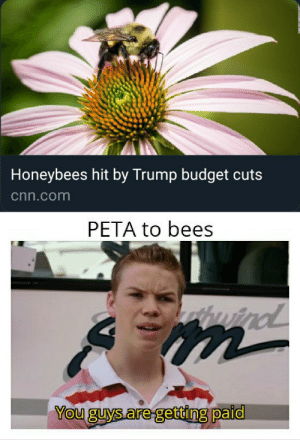 PETA just go and get a life.: Honeybees hit by Trump budget cuts  cnn.com  PETA to bees  uind  m  You guys are getting paid PETA just go and get a life.