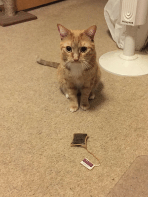 Some cats bring their humans birds and miceOliver brings me teabags: Honeywell Some cats bring their humans birds and miceOliver brings me teabags